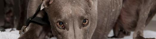 Greyhound Hilfe